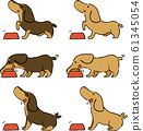 动物狗腊肠犬饭 61345054