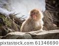 一隻猴子 61346690