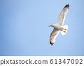 一隻鳥 61347092