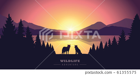 wildlife adventure wolf in the wilderness by the lake at sunset 61355575