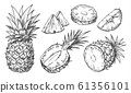 Sketch of pineapple. Isolated hand drawn ananas 61356101