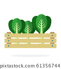 Cabbage in a wooden box flat isolated 61356744