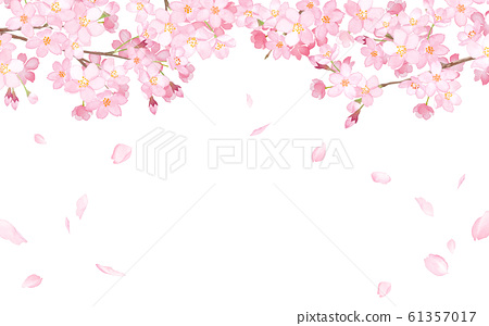Cherry blossoms and falling petals frame watercolor illustration 61357017