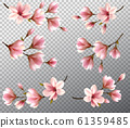 Big collection with beautiful magnolia branches on 61359485