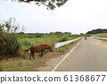 Kohamajima Horse 61368677