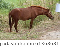 Kohamajima Horse 61368681
