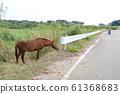 Kohamajima Horse 61368683