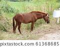 Kohamajima Horse 61368685