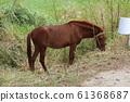 Horse 61368687