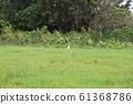 Obama Island Egret 61368786