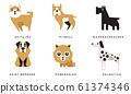Breeds of Dogs Collection, Akita Inu, Pitbull, Riesenschnauzer, Saint Bernard, Pomeranian, Dalmatian Vector Illustration 61374346