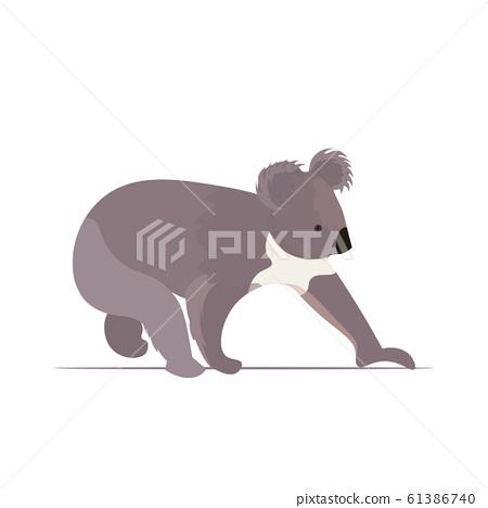 koala icon cartoon endangered wild australian animal symbol wildlife species fauna concept flat 61386740
