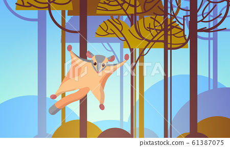 sugar glider flying in forest australian wild animal wildlife fauna concept landscape background horizontal 61387075