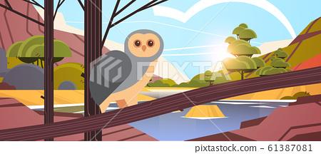 owl bird sitting on branch australian wild animal wildlife fauna concept landscape background horizontal 61387081