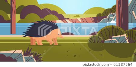 echidna walking in forest australian wild animal wildlife fauna concept landscape background horizontal 61387364