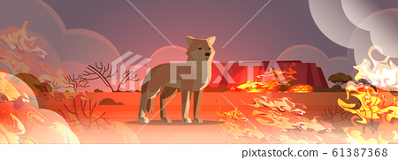 dingo escaping from fires in australia animal dying in wildfire bushfire natural disaster concept intense orange flames horizontal 61387368