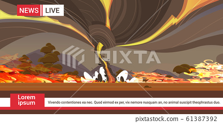 live brodcasting dangerous wildfire australia bush fire development dry woods burning trees global warming natural disaster breaking news concept intense orange flames horizontal copy space 61387392