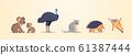 set cartoon endangered wild australian animals collection wildlife species fauna concept flat horizontal 61387444