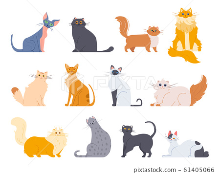 Cat breeds. Cute fluffy cats, maine coon, bobtail, siamese cat and funny sphynx cat, pedigree breeds pets isolated illustration icons set. Flat vector drawing pack 61405066