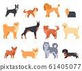 Breeds of dogs. Doberman dog, alaskan malamute, cute bulldog and akita. Group of purebred pedigree doggy character vector isolated illustration icons set. Flat style cartoon animals bundle 61405077