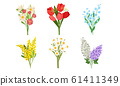Spring Flowers Growth Vector Set. Colorful Garden and Wild Plants Growing in Spring 61411349