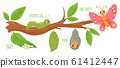 Cartoon butterfly life cycle. Caterpillar transformation, butterflies eggs, caterpillars and pupa. Insects growing vector illustration. Insect development stages. Cute wildlife on tree branch 61412447