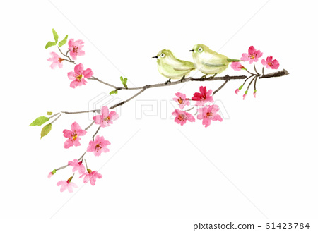 White-eye and cherry blossom ink painting 61423784