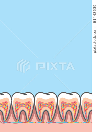 Blank banner Cross-section structure inside tooth 61442639