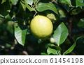 檸檬檸檬水果 61454198