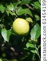 檸檬檸檬水果 61454199