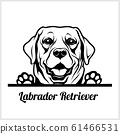 dog head, Labrador Retriever breed, black and white illustration 61466531