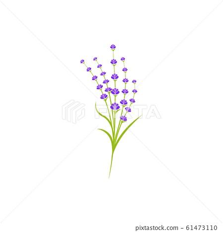 Lavender flower Vector icon illustration 61473110