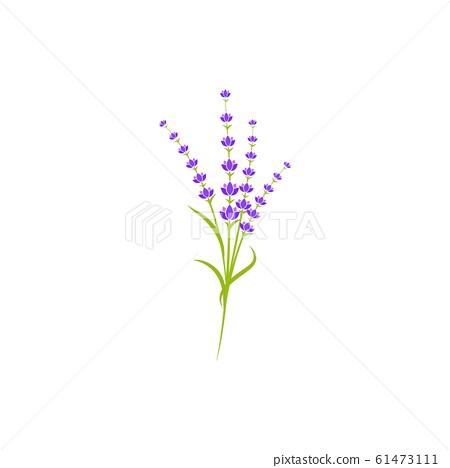 Lavender flower Vector icon illustration 61473111