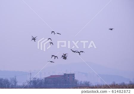 시흥갯골생태공원,시흥시,경기도 61482872