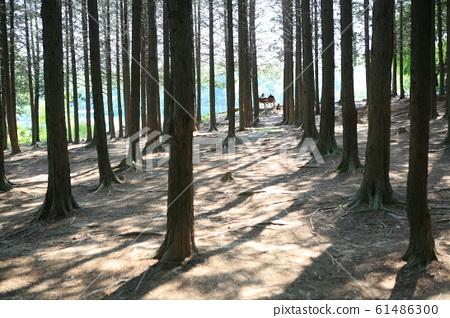 5월의 숲 61486300