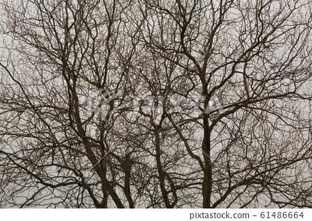 Winter tree 61486664