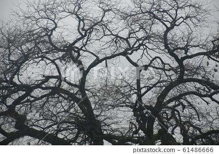 겨울 나무 61486666