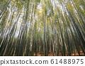 Bamboo field 61488975