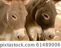 Two donkeys 61489006