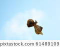 Sky and snail 61489109