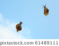 Sky and snail 61489111