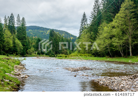 mountain river in the forest 61489717