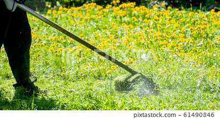 trimming dandelions and other weeds in the yard 61490846