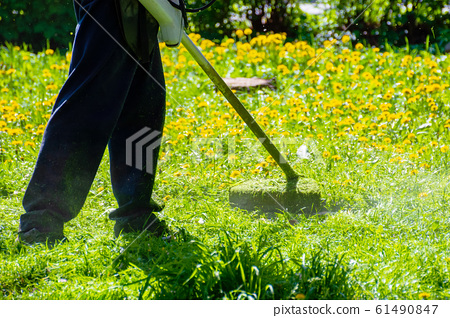 trimming dandelions and other weeds in the yard 61490847