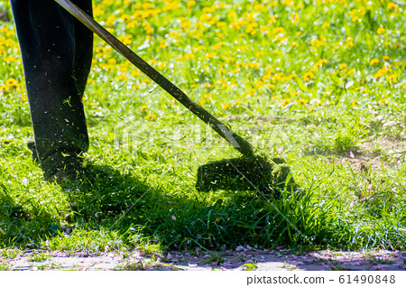 trimming dandelions and other weeds in the yard 61490848