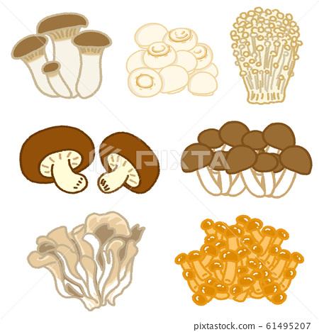 Shiitake mushrooms, shimeji mushrooms, enoki mushrooms, eringgi, maitake mushrooms, nameko mushrooms, mushroom mushrooms illustration material set 61495207
