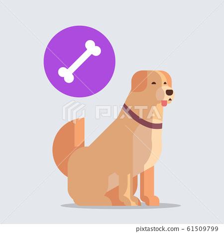 retriever icon cute dog labrador dreaming about bone furry human friends home animals concept full length 61509799
