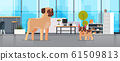 Pug and French Bulldog standing together human friend home pet concept modern living room interior cartoon animals horizontal full length 61509813