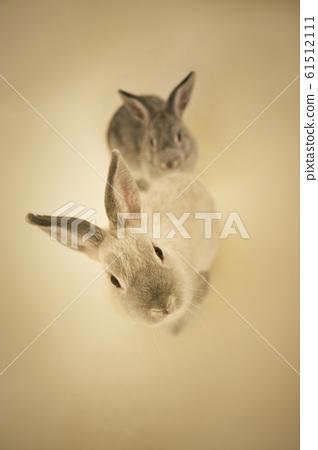 在工作室裡拍照的兔寶寶 61512111