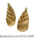 Bamboo shoots 61521908